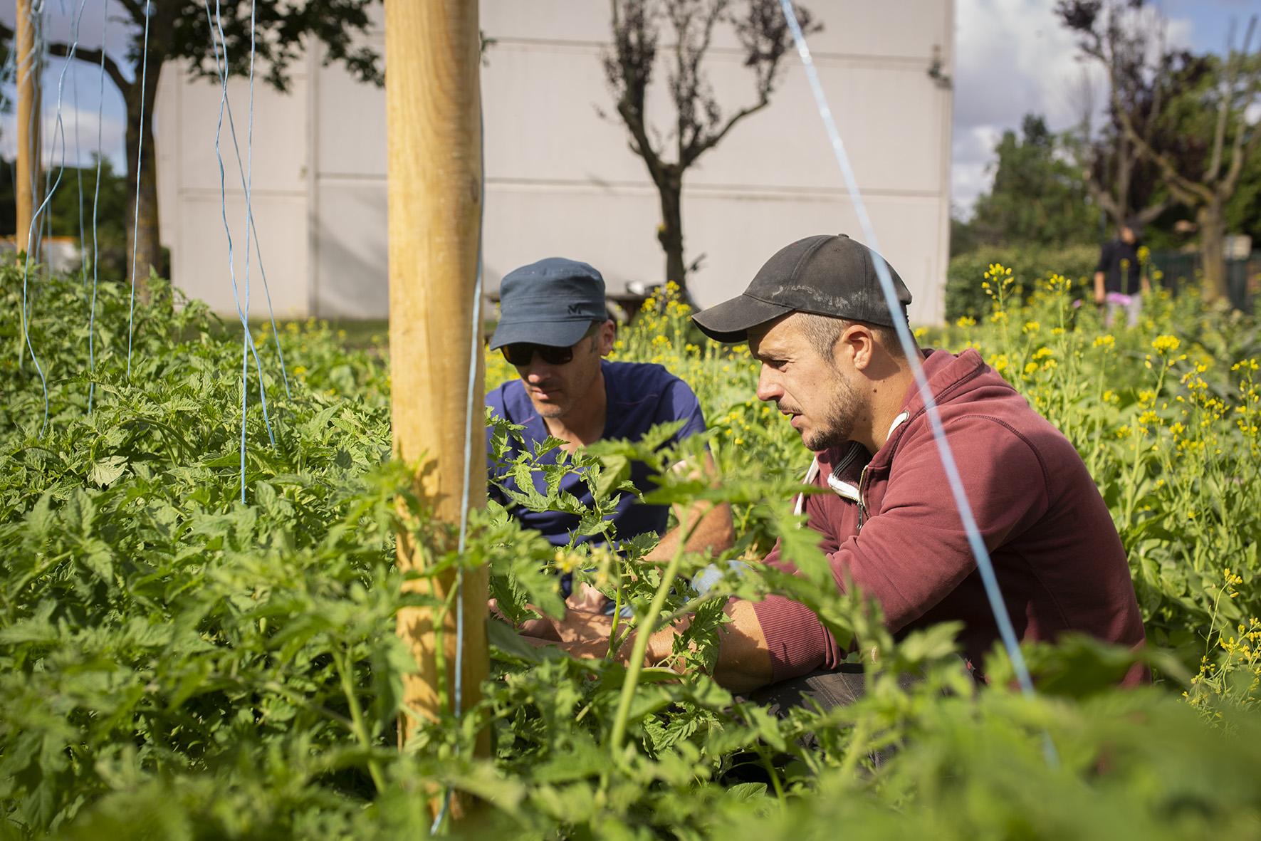 La Milpa, une nouvelle manière de penser l'agriculture urbaine !