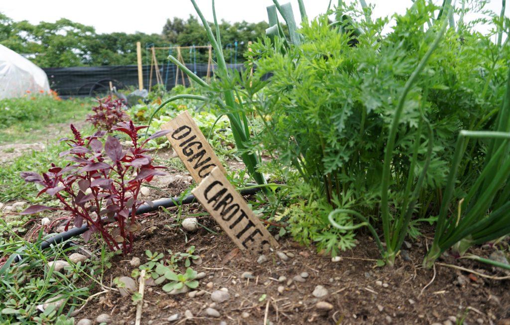 jardins familiaux la milpa