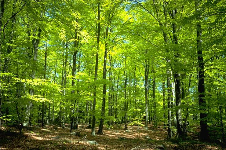 forêts gérées durablement symbiosphère