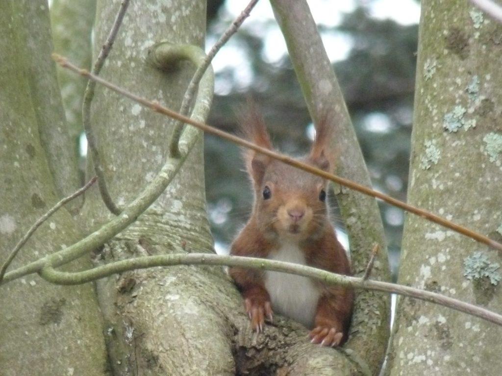 nichoir pur écureuil symbiosphère