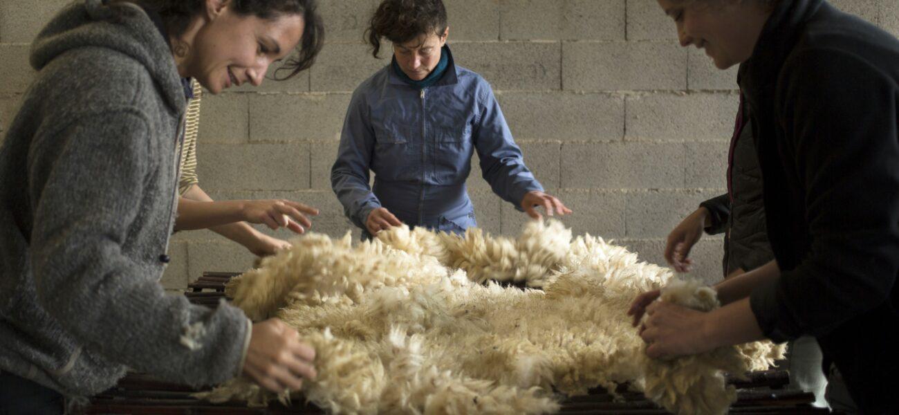 Atelier de récolte de la laine